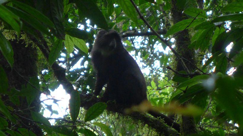 Der erste Affe