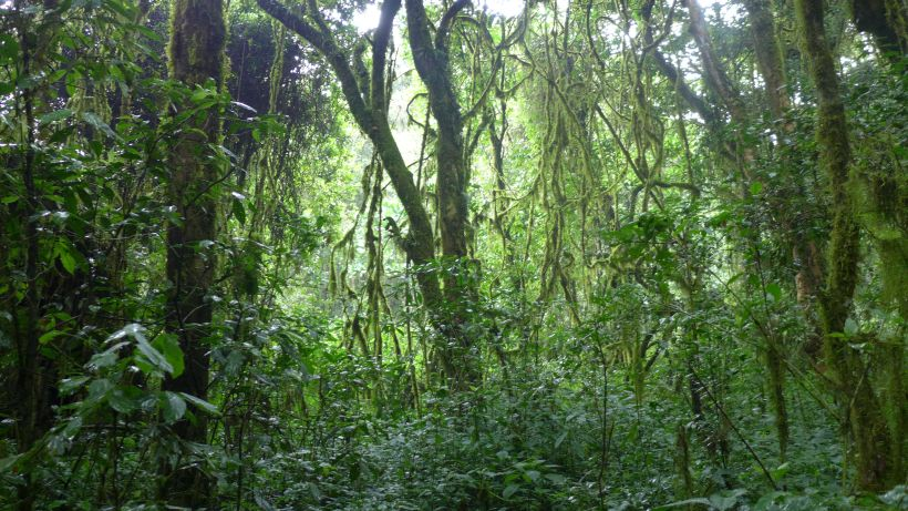 Zurück durch den Regenwald