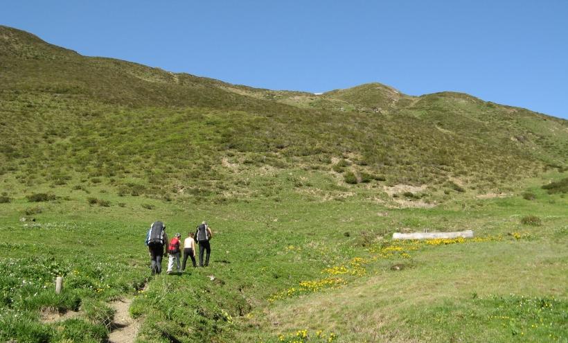 Jenazer Alp